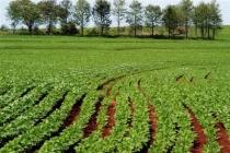 agricultura-210.jpg