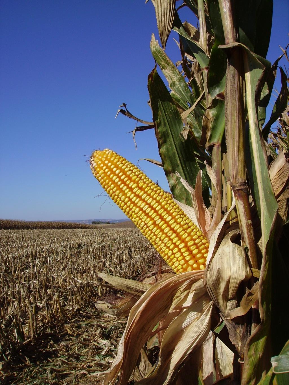 agricultura_cereais
