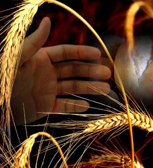 alimentar_agricultura