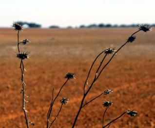 seca_agricultura