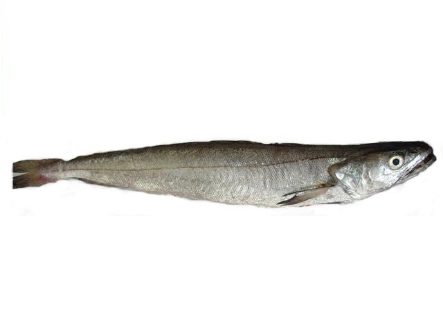 pescada