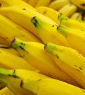 banana-da-madeira