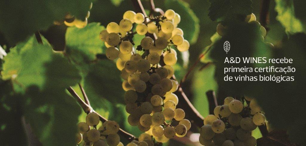 AD&Wines