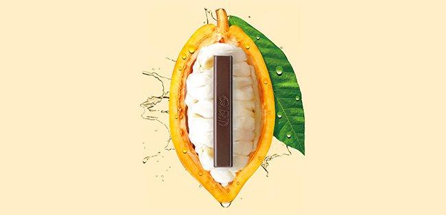 kit-kat-cocoa-pulp-feed