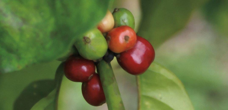 nespresso-mozambique-feed