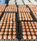 ovos-preservados-no-mercado-grossista-de-paineis_26018-62
