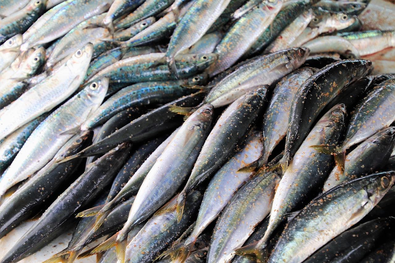 seafood-3248701_1280