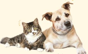 Banco Solidário Animal_Missão Continente