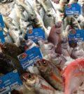 Peixe CCL (Large)